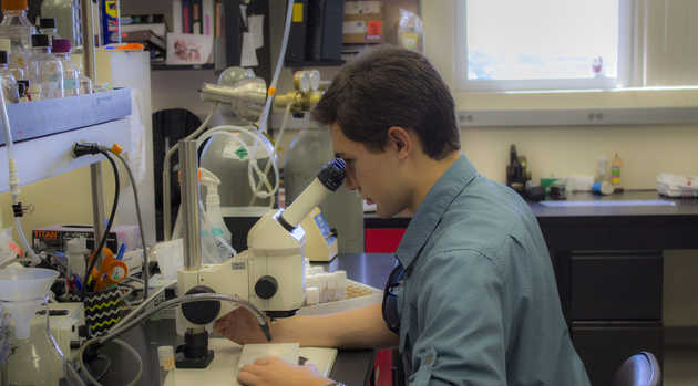 Jeremiah Pate inspects fruit flies under a microscope in the Zarnescu lab. (Photo credit: Emily Walla/UANews)