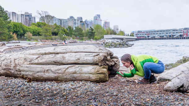 Christine Phelan uses the iNaturalist app in Seattle. (Photos by Scott Eklund/Red Box Pictures)