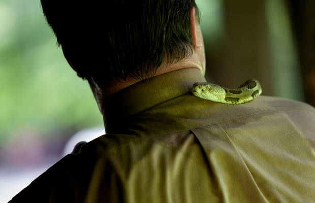 Pastor Mack Wolford's rattlesnake slithers around his neck during an outdoor service in May 2011. (Photo credit: Lauren Pond)