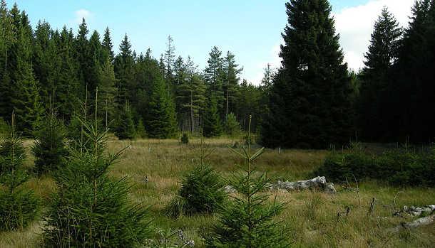 Das Schlöppnerbrunnen-Moor im bayerischen Fichtelgebirge (Image copyright: Universität Wien).