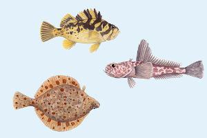 Steinfisch, Eisfisch und Flunder (von oben nach unten) gehören zu den Arten, die in kalten Ozeanen leben. Bild credit: Julie Johnson/University of Michigan