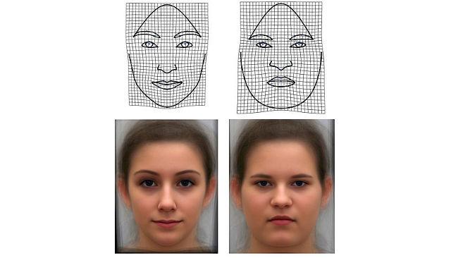 Körperfett verändert die Gesichtsform. Das wurde berechnet und hier anhand sogenannter Deformationsgitter (obere Reihe) und GM-Morphs (untere Reihe) veranschaulicht. Mit letzteren lässt sich testen, wie diese Veränderungen den ersten Eindruck beeinflussen (Image copyright: Schäfer, Windhager, Universität Wien).