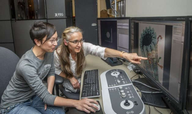 Liz Kellogg and Eva Nogales performing cryo-EM to determine the structure of the tau protein bound to microtubules, which has implications for understanding Alzheimer's Disease. ( Image Credit: Berkeley Lab)