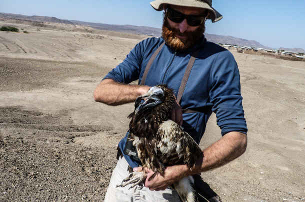 Evan Buechley with a juvenile Egyptian vulture. PHOTO CREDIT: Evan Buechley