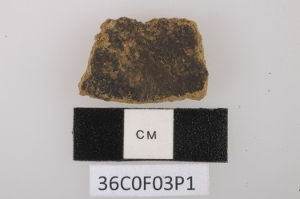 A potsherd artifact found at the Pulau Ay archaeological site. It was one of several pottery pieces containing traces of foods, including the earliest-known use of nutmeg. Image credit: Peter Lape/U. of Washington
