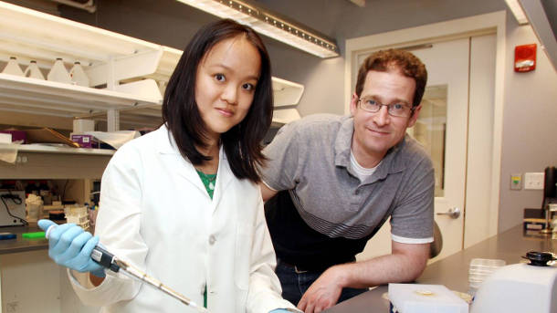 Wendy Mok, a postdoctoral researcher, and Mark Brynildsen, an associate professor of chemical and biological engineering, determined that bacteria that repaired DNA damaged by antibiotics before resuming growth had a much better chance of surviving treatment. Photo by Frank Wojciechowski