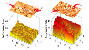 AFM reveals that structural water in tungsten oxide results in smaller deformation rates from ion intercalation, an unexpected finding on the role of structural water that can enable materials with higher power and efficiency energy storage devices. Image credit: North Carolina State University