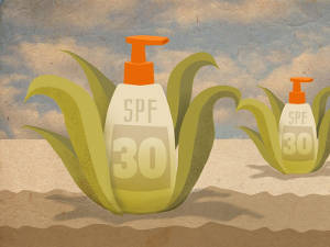 Researchers at RiKarbon are combining plant scraps and natural oils, through chemistry, to engineer a bio-based oil that can be used as a renewable alternative to typical petroleum-based resources used in everything from popular skin lotions and sunscreens to lubricants for shipping, agriculture, food processing and hydropower production, among other things. Illustration by Jeffrey Chase